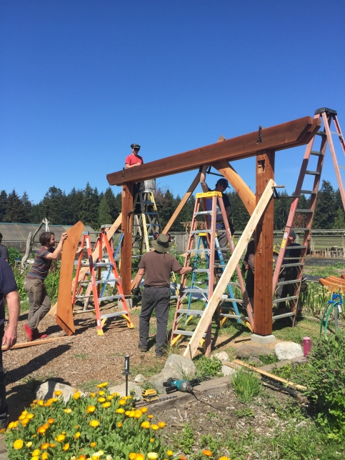 Red cedar beams being constructed into an outdoor pergola