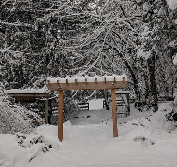 Western Red cedar arbor in snow